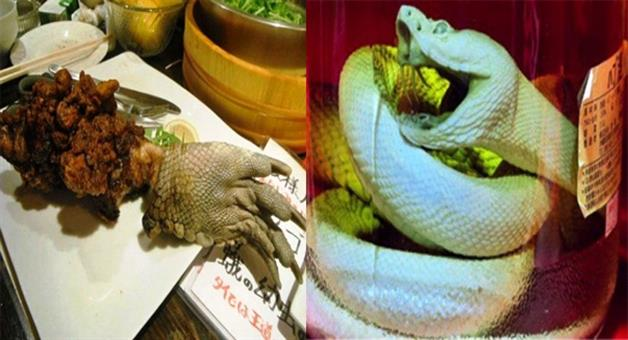 Khabar Odisha:-japanese-restaurant-serves-the-worlds-most-outrageous-dishes