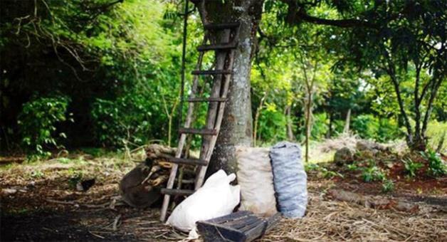 Khabar Odisha:Mahmod-live-alive-eat-leafs-since-25-years