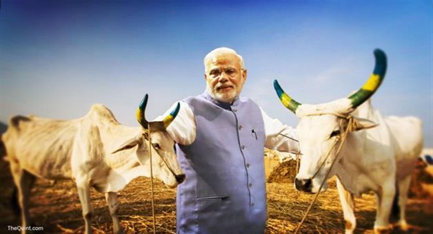 Khabar Odisha:Modi-government-suggests-adhar-card-like-system-for-cows