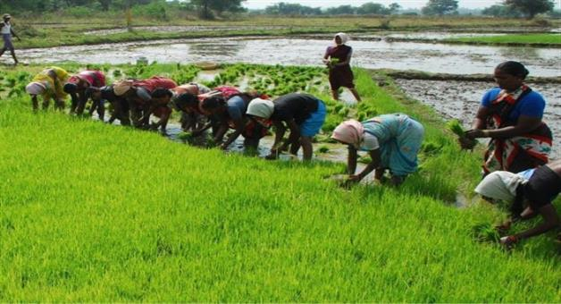 Khabar Odisha:Odisha-Government-Think-Agricultural-Labour-As-Step-Mother