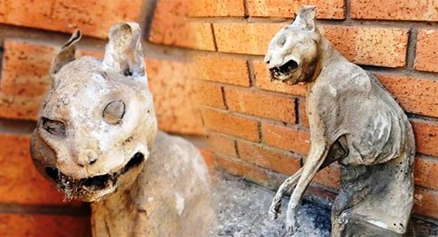 Khabar Odisha:homeowner-finds-mummified-cat