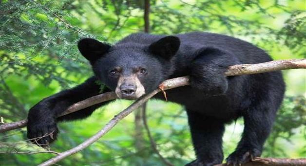 Khabar Odisha:Bear-Horror-In-Kantabanji-Village-Odisha