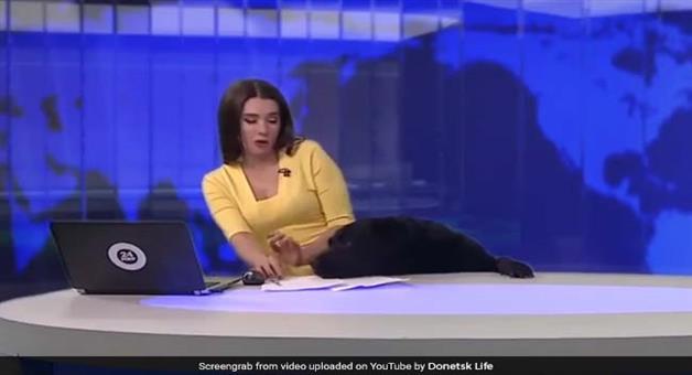 Khabar Odisha:labrado-dog-r-enters-into-on-air-studio-in-moscow