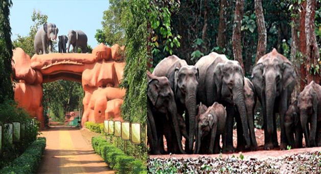 Khabar Odisha:Elephant-disappear-from-Chandaka-forest