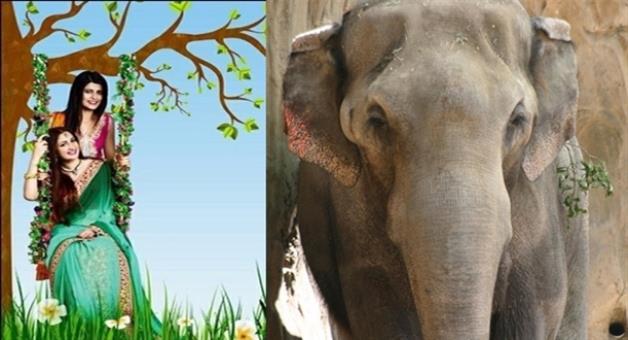 Khabar Odisha:Raja-utsav-begins-today-elephants-are-in-conflicts
