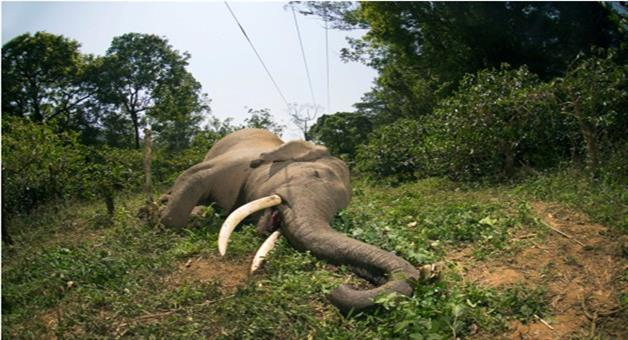 Khabar Odisha:The-way-of-canals-responsible-for-elephants-death