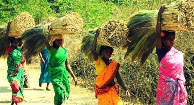 Khabar Odisha:Gajapati-Women-Selfdependend
