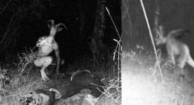 Khabar Odisha:Mysterious-animal-in-Niali