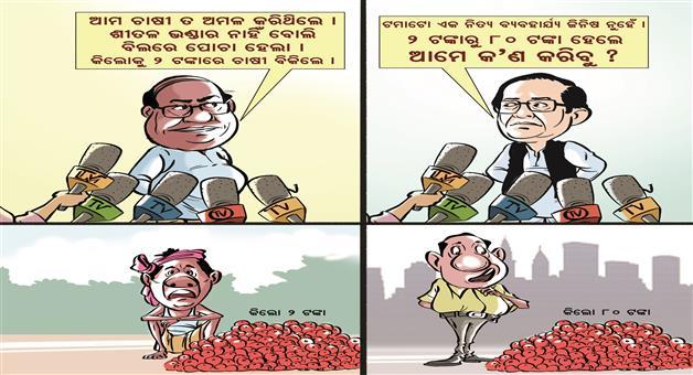 Khabar Odisha:Dama-Rout-Surya-Patra-Cartoon-Tomato