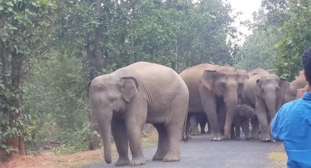 Khabar Odisha:jhadakhandi-elephant-snatching-at-champua-keonjhar-dist
