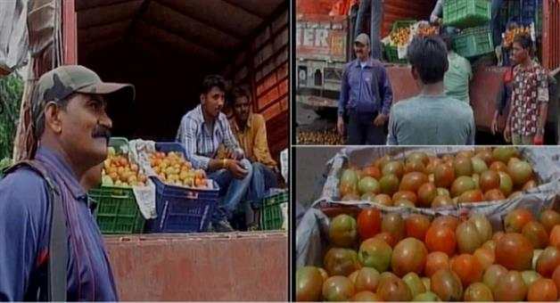 Khabar Odisha:madhya-pradeshbhopalindoremen-with-arms-guard-tomatoes-at-indore-vegetable-market