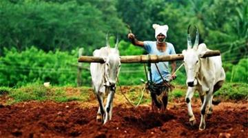 Khabar Odisha:Farmers-Problem-And-their-Solution