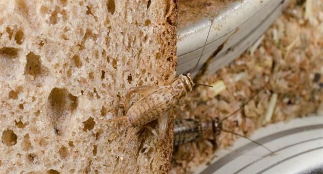 Khabar Odisha:a-bakery-in-finland-is-making-bread-from-insects