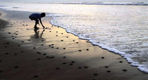 Khabar Odisha:festival-for-turtles-in-maharastra