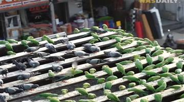 Khabar Odisha:A-Chennai-man-feeds-45000-birds-a-day-to-6000-birds