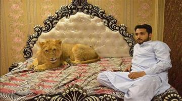 Khabar Odisha:Ajab-khabar-Odisha-pakistani-man-zulkaif-chaudhary-living-with-a-lion-in-his-bedroom