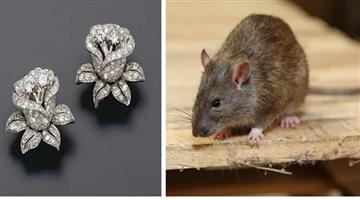 Khabar Odisha:AjabKhabar-Odisha-rats-stolen-diamond-tops-from-jewelry-shop-in-patna