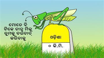 Khabar Odisha:Cartoon-lucust