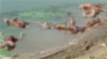 Khabar Odisha:Covid-Panic-In-Bihar-Town-As-Over-40-Bodies-Wash-Up-On-Banks-Of-Ganga