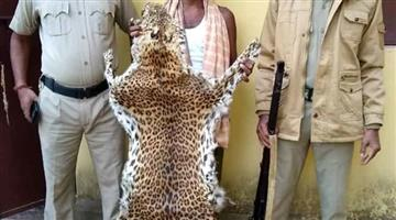 Khabar Odisha:Crime-Odisha-Tiger-skin-smuggling-Found-3arrested