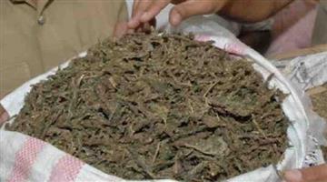 Khabar Odisha:Crime-Odisha-ganja-seized-from-Malkangiri