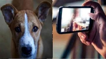 Khabar Odisha:Cross-border-atrocities-inhumane-acts-with-dogs-videos-viral