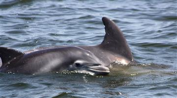 Khabar Odisha:Dolphin-census-begins-in-all-over-odisha