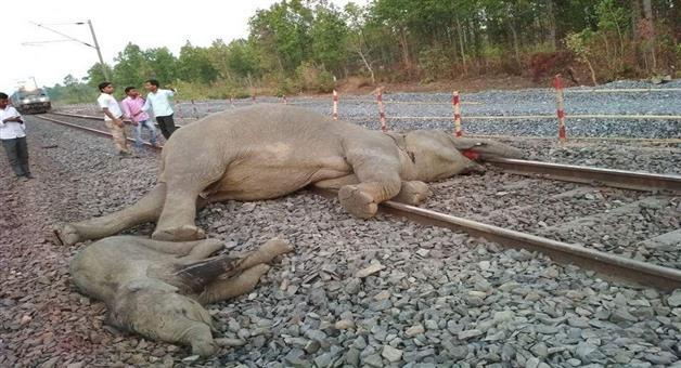 Khabar Odisha:Elephant-Special-machines-transmitting-sound-of-bees-to-be-installed-to-keep-elephants-away-from-railway-tracks-in-Odisha