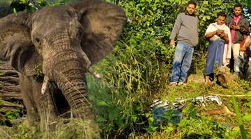 Khabar Odisha:Elephant-attacks-are-raising-concerns-in-Dhenkanal-2-dead-in-2-days