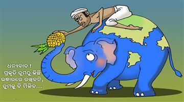 Khabar Odisha:Elephant-dead