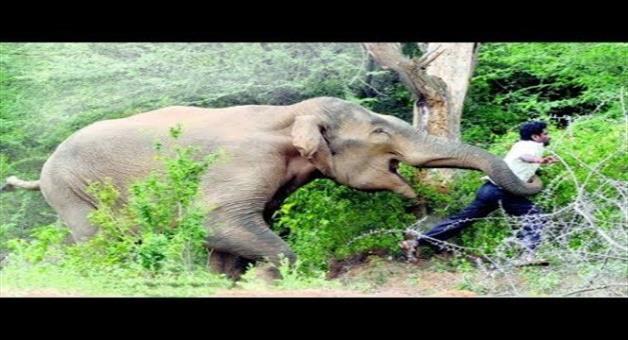 Khabar Odisha:Elephant-killed-368-human-in-last-4-years
