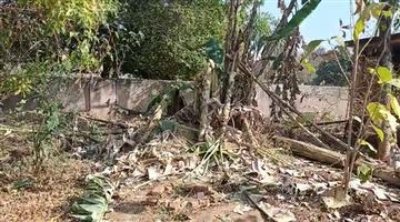 Khabar Odisha:Elephant-poaching-in-Mayurbhanj-Extensive-crop-damage