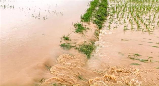 Khabar Odisha:Farmers-Affected-for-Rain