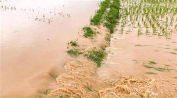 Khabar Odisha:Farmers-Affected-for-Rain