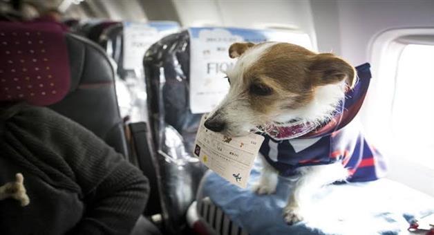 Khabar Odisha:Flight-for-pet-animal