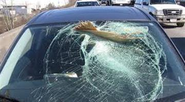 Khabar Odisha:Forest-workers-were-injured-in-the-attack-and-the-vehicle-was-wrecked