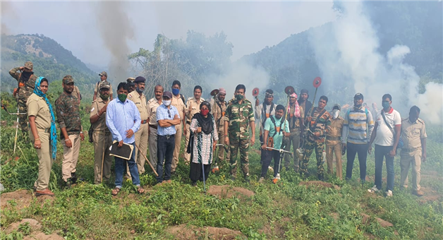 Khabar Odisha:Huge-quantities-of-cannabis-cultivation-have-been-destroyed-in-Mohana