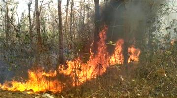 Khabar Odisha:In-addition-to-the-Shimlipal-Tiger-Project-394-forests-have-been-set-on-fire