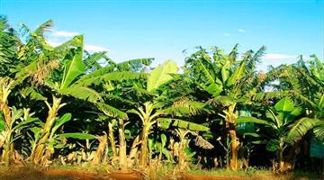 Khabar Odisha:Kandhamal-farmers-have-become-self-sufficient