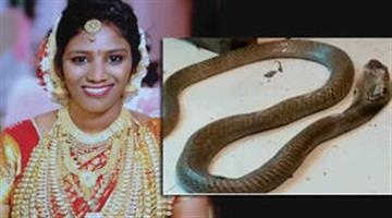 Khabar Odisha:Kerala-Man-Kills-Wife-Using-Cobra-Snake-to-Bite-Her-Say-Police