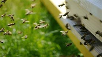 Khabar Odisha:Koraput-farmers-harvest-25-tonnes-of-honey-annually-by-planting-honey-boxes-in-innovation-way