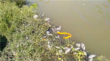 Khabar Odisha:Large-number-of-fishes-found-dead-in-Paradip