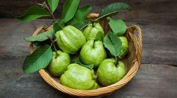Khabar Odisha:Lifestyle-Odisha-Health-benefits-of-Gouva