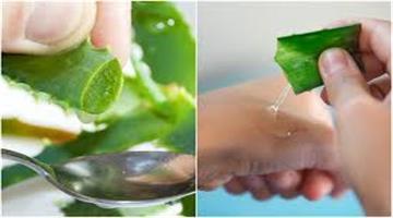 Khabar Odisha:Lifestyle-Odisha-aloe-vera-juice-benefits