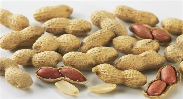 Khabar Odisha:Lifestyle-Odisha-amezing-health-Benefits-of-Peanuts