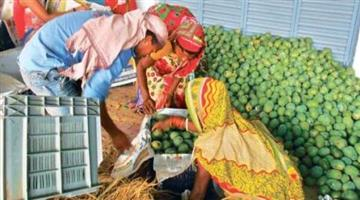 Khabar Odisha:Mango-market-face-laport-problem