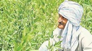 Khabar Odisha:Modi-ministry-declare-MSP-soon