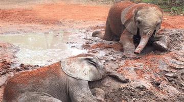 Khabar Odisha:Mysterious-Botswana-elephant-dies