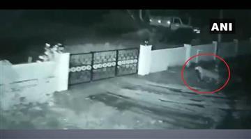 Khabar Odisha:Nation-Leopard-enters-Karnataka-home-runs-away-with-pet-dog-Watch-scary-moment