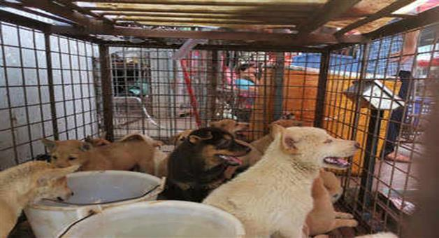 Khabar Odisha:Nation-Nnagaland-government-bans-trade-and-sale-of-dog-meat-press-note-released
